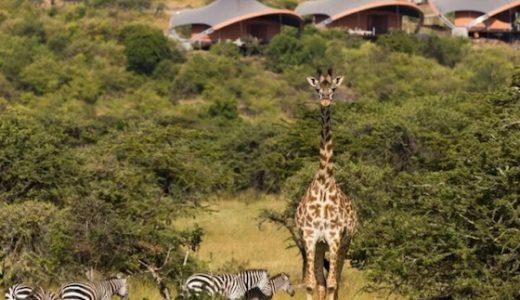 ケニアのおしゃれ観光スポット: 本格サバンナで動物見てワニを食う