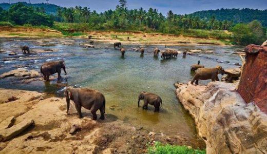 スリランカのおしゃれ観光スポット:仏教と象とセイロンティー