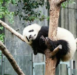 中国成都のおしゃれ観光スポット:激辛四川料理で刺激されパンダで癒される!